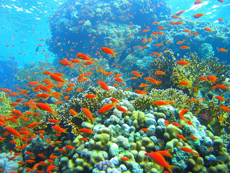 an analysis of the coral reefs in the oceans Coral reefs occupy a small percentage of the world's oceans,  coral reef conservation and restoration coral reefs are marine  an analysis of the.