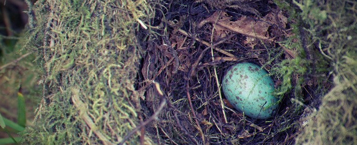 Thrush egg, Walbran Valley. Photo courtesy Ellen Atkin.